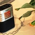 Plantas funcionando como antenas de transmisión para radio