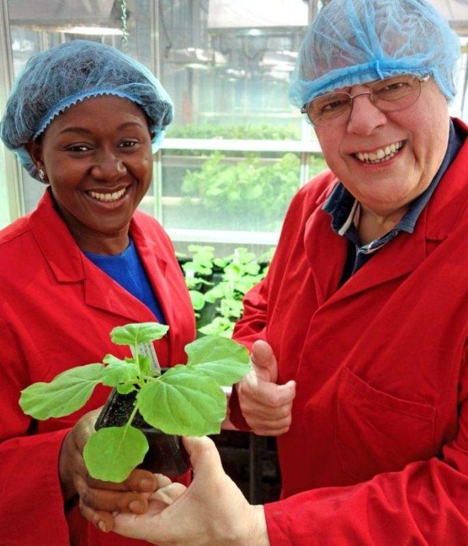 Emplean plantas para producir una nueva vacuna contra el virus de la polio