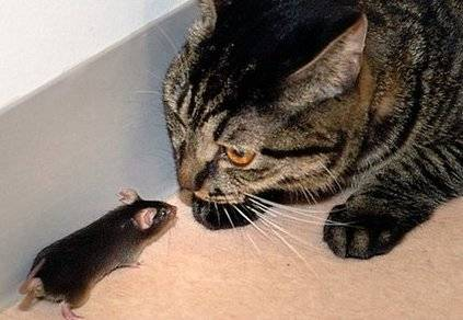 El porqué los Ratones le tienen miedo a los Gatos