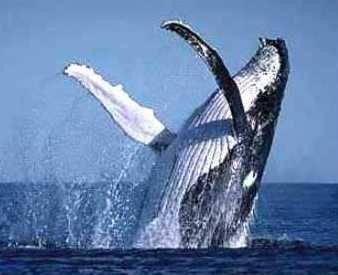 Las Ballenas y Delfines poseen olfato