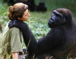 La Enfermedad de la Malaria tuvo su origen en los Gorilas