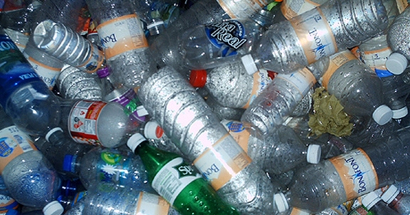 Descubren un hongo que recicla el plástico