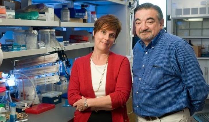 Crean una poderosa proteína capaz de bloquear la expansión de un tumor canceroso